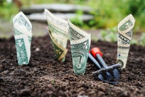 growing money out of the ground